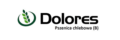 Pszenica chlebowa Dolores